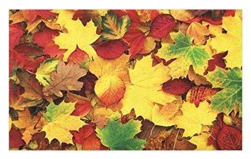 GugeABCmat Yellow and Brown Doormat,Shady Fall Leaves Faded Trees Autumn Nature Dramatic Seasonal Image,Absorbent Bedroom Living Room Floor Mats 24