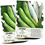 Seed Needs, Luffa Gourd (Luffa aegyptiaca) Twin Pack of 45 Seeds Each Non-GMO