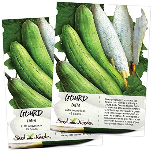 - Seed Needs, Luffa Gourd (Luffa aegyptiaca) Twin Pack of 45 Seeds Each Non-GMO