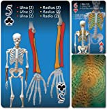 Human skeleton playing cards (English, Spanish and French Edition)