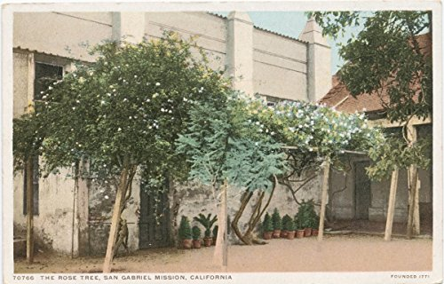 Fine Arts Mission Rose (Vintage Postcard Print   The Rose Tree, San Gabriel Mission, California, 1898   Historical Antique Fine Art Reproduction)