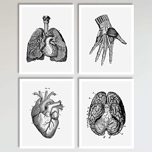 4 Piece Anatomy Illustration Set, Lungs, Hand, Brain and Heart Prints, Neutral Wall Decor, Home Bedroom and Office Wall Art Posters 4 Piece Set, 11 x 14 inches each Unframed