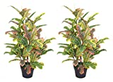 AMERIQUE Pair Gorgeous 4 Feet Tropical Codiaeum Trees Artificial Silk Plant, with Nursery Plastic Pots, UV Protection, Feel Real Technology, Super Quality 4, 4' Each, Yellow and Green