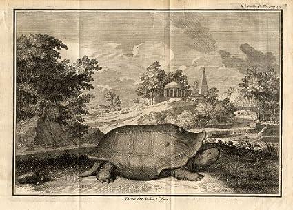 Amazon Antique Print Turtle Anatomy Perrault Duflos 1758