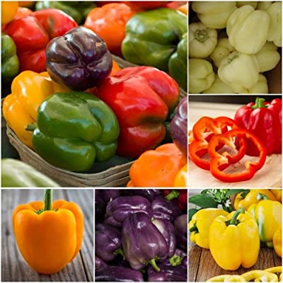 Package of 100 Seeds, Rainbow Mixed Bell Peppers (Capsicum annuum) Non-GMO Seeds by Seed Needs