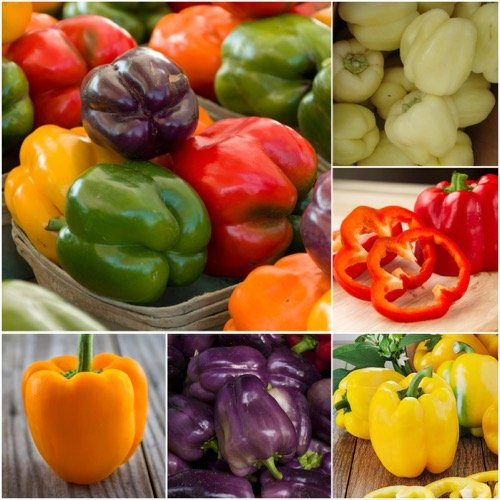 Package of 100 Seeds, Rainbow Mixed Bell Peppers (Capsicum annuum) Non-GMO Seeds by Seed (Capsicum Bell Pepper)
