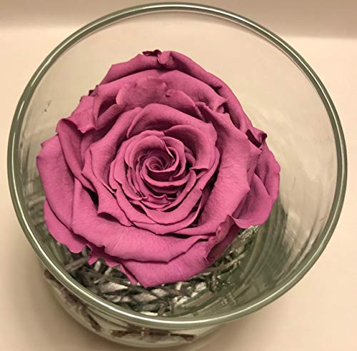 - Majesty Pink Rose - Preserved Pink Rose in a decorative glass vase. Great gift for any occasion or holiday. Eternal Rose that lasts over a year. Birthday, Anniversary, Mother's day, Valentine's day, B