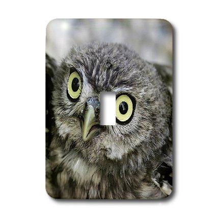 3dRose LLC lsp_9929_1 Little Owl, Athena Noctua, Aragon Spain Europe 4 Single Toggle Switch by 3dRose