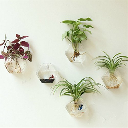 Kingbuy 3 Pack Design Home Decor Wall Decorations Plant Terrarium Glass Planter Hexagon Shape Wall Hung Water Planting Glass Vase,L