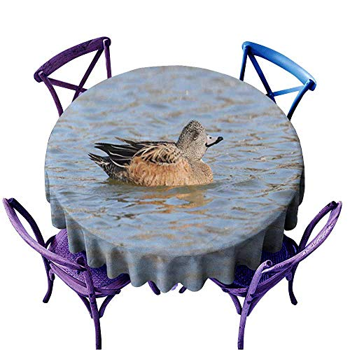 Acelik Stain Resistant Round Tablecloth,American Wigeon (Anas Americana) 1,Table Cover for Kitchen Dinning Tabletop Decoratio,55 INCH ()