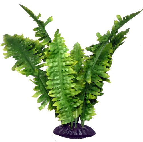 Boston Fern 25cm by Komodo
