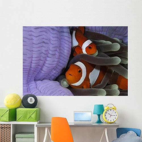 (Pair Clown Anemonefish Indonesia Wall Mural by Wallmonkeys Peel and Stick Underwater Landscape Graphic (72 in W x 48 in H) WM345783)
