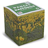 "Reprinting -Dances with the Daffodils Note Cube/NOT STICKY 3.5"" cube - Wordsworth poem printed on sides - Made in USA (paper US or CAN) - 100% Recycled 24 lb. bond - 700 white tear-off pages NOT LOOSE"