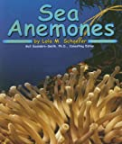 Sea Anemones (Ocean Life)