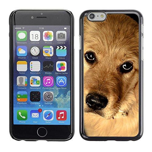 "Premio Sottile Slim Cassa Custodia Case Cover Shell // V00003354 golden retriever // Apple iPhone 6 6S 6G 4.7"""