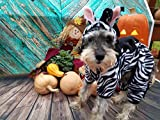 Dog zebra Costume Pet Zebra Cat Costume