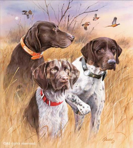 James Killen - Great Hunting Dogs - German Shorthair ()