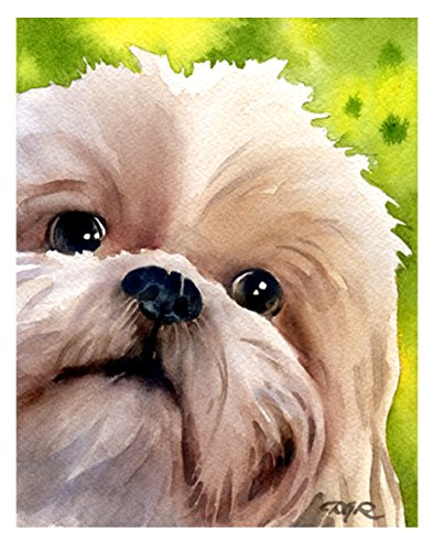 (Shih Tzu Watercolor Art Print by Artist Dj Rogers)