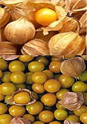 10+ Cape Gooseberry Seeds GOOD FOR JELLY & PRESERVES