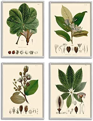 Stupell Industries Plant Anatomy Chart Vintage Scientific Illustration Unknown Artist Grey Framed Wall Art 4pc Each 16 x 20