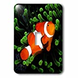 3dRose Tropical Fish - Clown Anemone Fish - Light Switch Covers - single toggle switch (lsp_621_1)