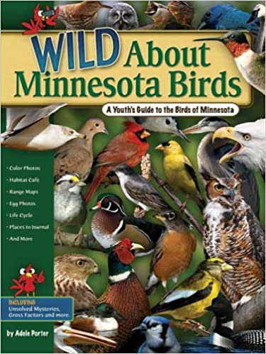 activities, bird identification, bird watching, birding, birding in rochester, birds, daytrips, eagles, egrets, exploring, family activities, family past times, herons, nature, outdoor activities, robins, rochester mn birdwatching areas, together