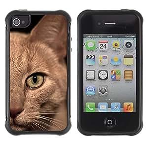 Suave TPU GEL Carcasa Funda Silicona Blando Estuche Caso de protección (para) Apple Iphone 4 / 4S / CECELL Phone case / / Burmese American Shorthair British Cat /