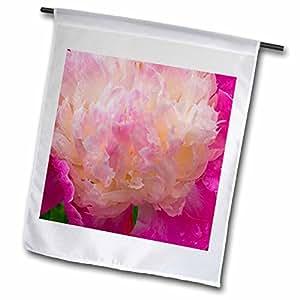 Danita Delimont - Flowers - Peony flower, Port Townsend, Washington - US48 DGU0130 - Darrell Gulin - 18 x 27 inch Garden Flag (fl_95340_2)