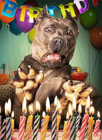 Stupendous Amazon Com Surprised Dog Birthday Cake Avanti Lenticular Funny Birthday Cards Online Inifofree Goldxyz