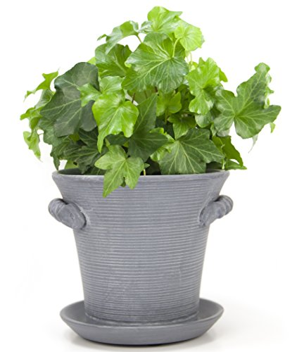 Rustic Charm Planter Beautifully Housewarming product image