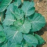 Gerogia Collards Seed
