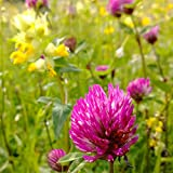 Red Clover Seeds (~1,000) by All Good Things Organic Seeds: Certified Organic, Non-GMO, Heirloom, Open Pollinated Seeds from The United States