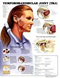 Temporomandibular Joint Anatomical Chart, Anatomical Chart Company Staff, 1587792966
