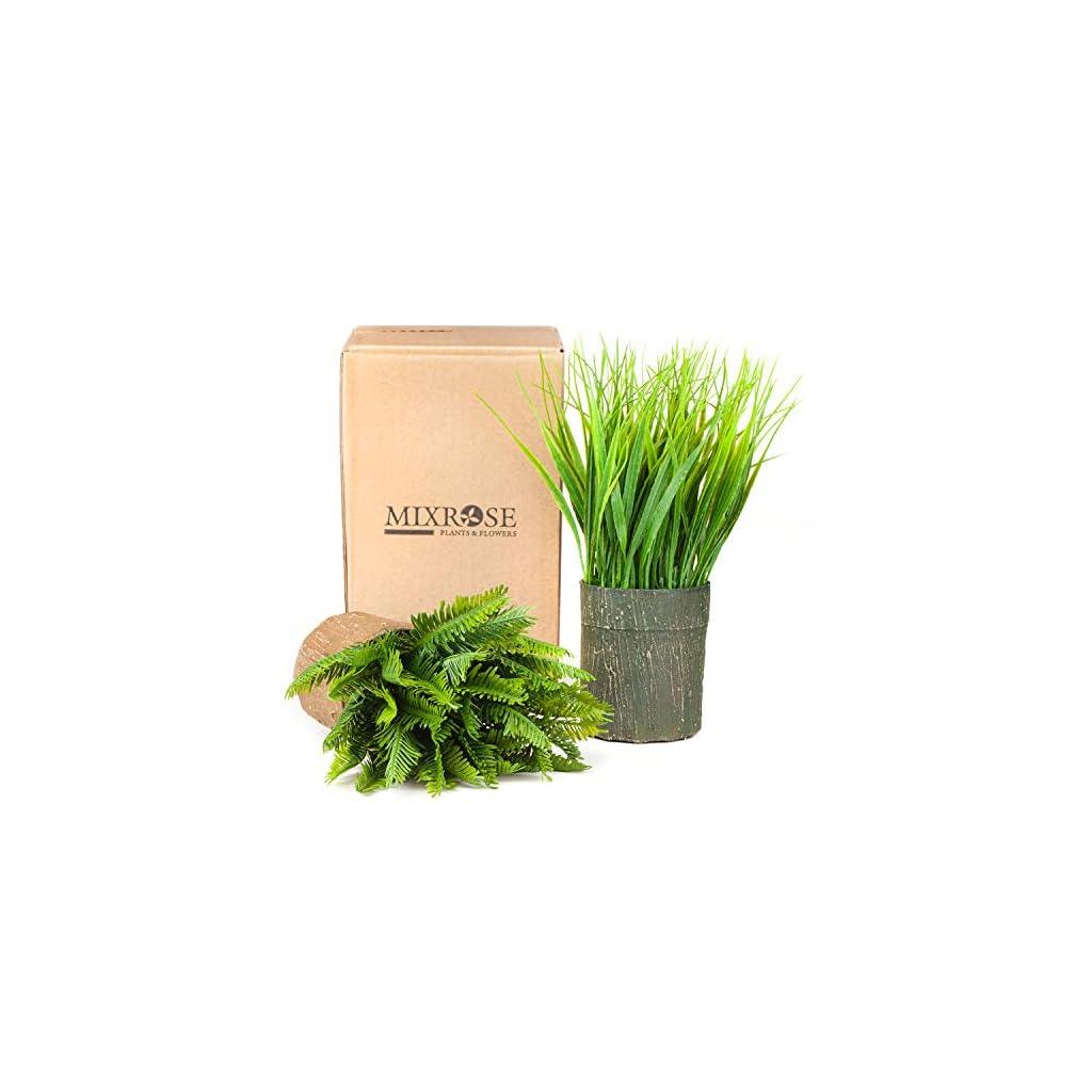 Mixrose-Lavender-and-Grass