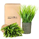 Mixrose-Lavender-and-Grass
