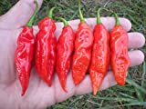 20 Red Datil Pepper Seeds by Pepper Gardeners