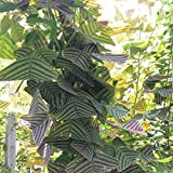 Sorlook Obcordata Seeds Green Butterfly Bonsai Home Garden Plant Vegetables