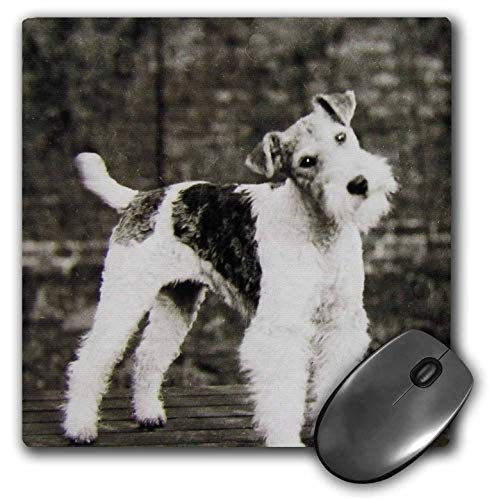 3dRose Scenes from The Past Magic Lantern - Vintage Wire Hair Fox Terrier Dog Circa 1900 Edwardian Era - Mousepad (mp_246098_1)