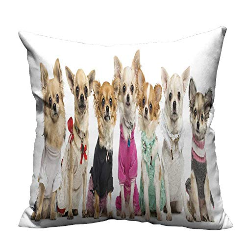 YouXianHome Pillowcase with Zipper Group of Dressed up Chihuahuas,Isolated on White Ultra Soft & Hypoallergenic (Double-Sided Printing) 21.5x21.5 inch]()
