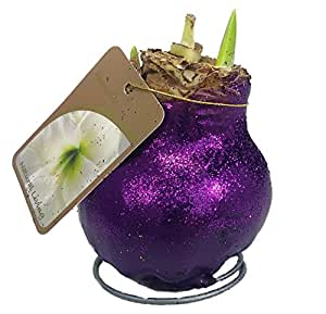 Amazon.com : Glitter Dipped Wax Amaryllis Bulb - Purple