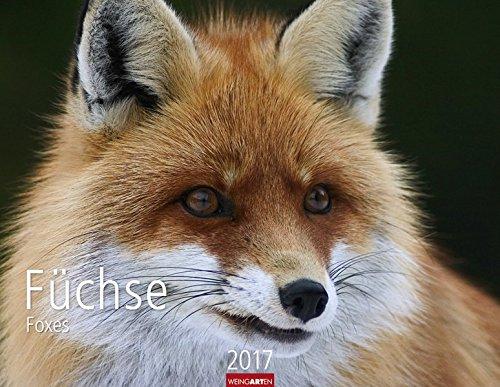 Füchse - Kalender 2017