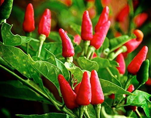 Hot Pepper Usa Phone