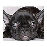 CafePress - French Bulldog Puppy Lies On A White - Soft Fleece Throw Blanket, 50''x60'' Stadium Blanket