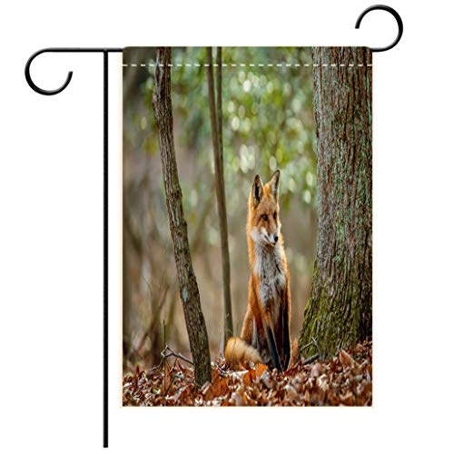 BEISISS Double Print Garden Flag Outdoor Flag House FlagBannerWild Red Fox Peeking Around a Tree in a forestdecorated for Outdoor Holiday Gardens