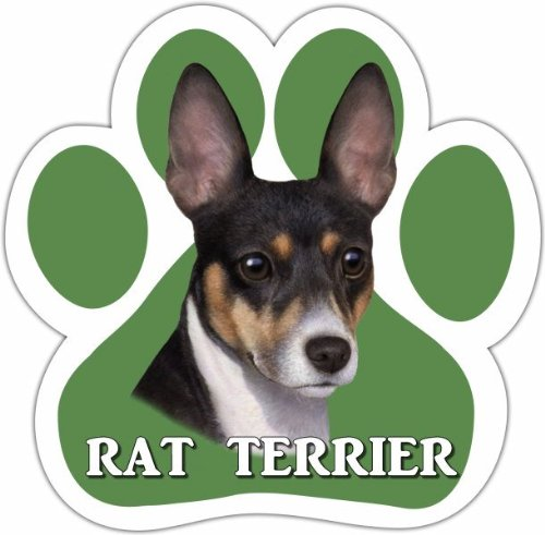 Rat Terriers In Costumes (E&S Pets 13125-92 Dog Car Magnet)