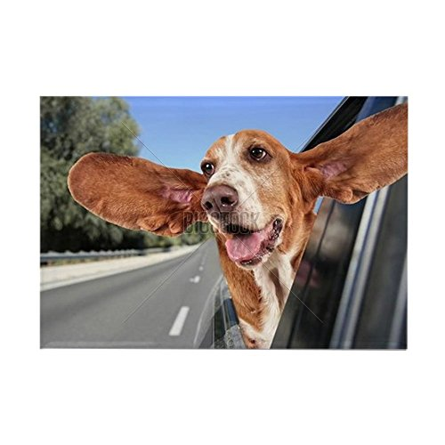 CafePress - a basset hound in a car Rectangle Magnet - Rectangle Magnet, 2