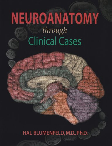purves neuroscience 2nd edition pdf