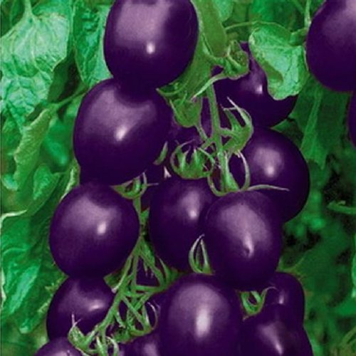 20-seeds-purple-cherry-tomato-organic-fruit-vegetable-plant