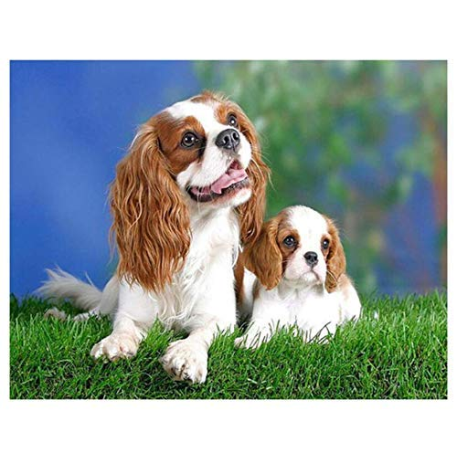 (YueQiSong Square Diamond Embroidery Cavalier King Charles Spaniel 5D DIY Diamond Painting Dog Picture Cross Stitch Holiday 30X40 cm)