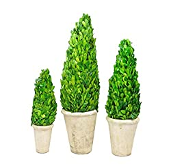 Galt International Naturally Preserved Real Boxwood Cone Shaped Topiary Plants with Restoration Style Pots, 12/16/20-Inch, Set of 3